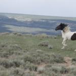 Wild-Horse-5